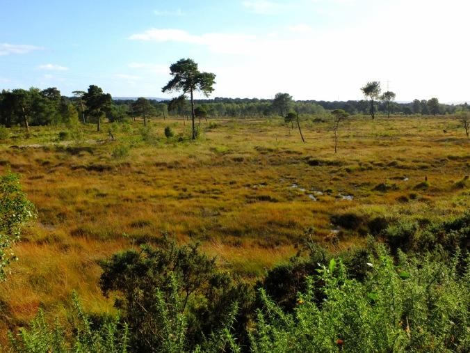 Upton Heath - one of several lowland heaths in our parish