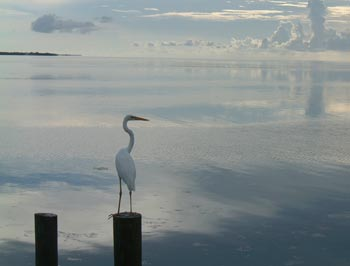 Egret on a Post
