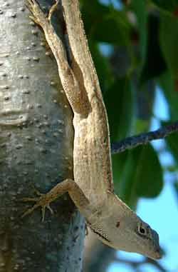 Lizards in the garden