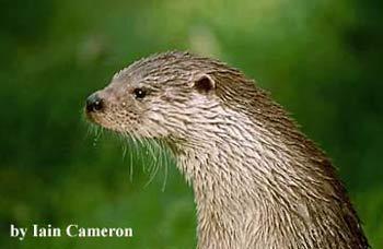 Dorset Otter Group