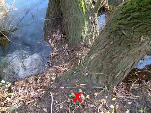 Otter Spraint Tree