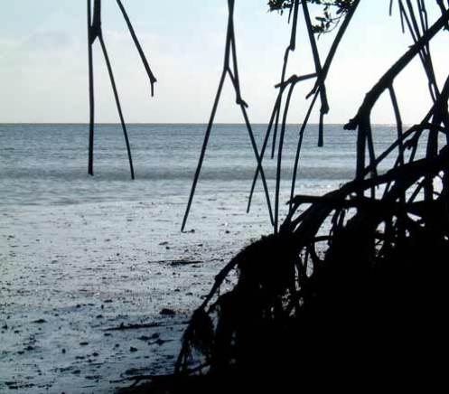 Mangroves by the Beach