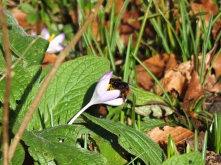 First Bumblebee 16 February